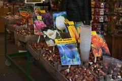 AMSTERDAM-MAY 13 :不同的种类郁金香电灯泡 图库摄影