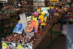 13 Amsterdam-MEI: Verschillende soorten tulpenbollen Stock Fotografie