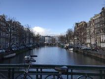 Amsterdam - Natur im Winter lizenzfreie stockbilder