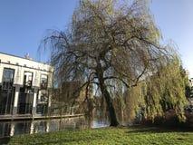 Amsterdam - Natur im Winter lizenzfreies stockbild