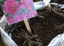Amsterdam Nederländerna - en övre sikt för slut av blommakulor arkivbilder