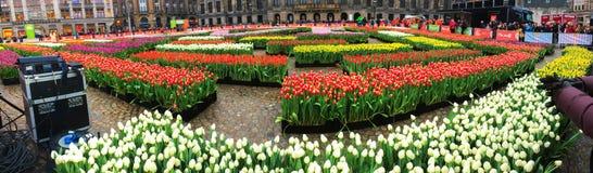 amsterdam Nederländerna Nationell dag av tulpan Arkivfoto