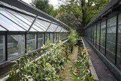 View of amsterdam botanical garden stock photo