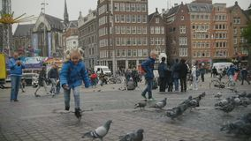 AMSTERDAM, NETHERLANDS - 16 oct 2016, Holland CAPITAL, Dam Square - children plays with doves on the historical center. Slow-motion, wide angle stock footage