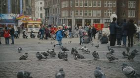 AMSTERDAM, NETHERLANDS - 16 oct 2016, Holland CAPITAL, Dam Square - doves on the historical center, slow-motion. Wide angle stock video footage