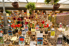 Amsterdam. NETHERLANDS - OCTOBER 20, 2013: People on Flower market on October 20, 2013. This is the only floating flower market in the world, and one of the Stock Photography