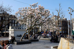 Amsterdam - pejzaż miejski Obraz Royalty Free