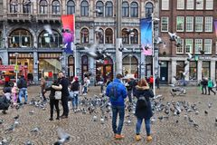 Amsterdam pigeons stock photo