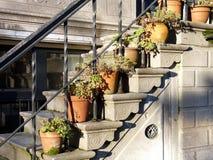 Amsterdam rośliny Obrazy Stock