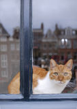 Amsterdam's cat. A classical cat at the window. Reflected in the window, typical buildings of the city of Amsterdam, the Netherlands Royalty Free Stock Photos