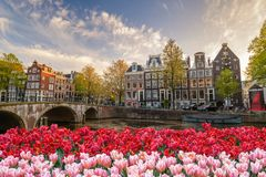 Amsterdam spring tulip flower, Netherlands. Amsterdam city skyline at canal waterfront with spring tulip flower, Amsterdam, Netherlands royalty free stock image