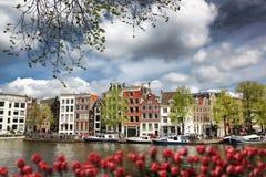 Amsterdam stad med fartyg på kanalen mot röda tulpan i Holland Royaltyfri Bild
