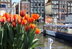 Amsterdam in tulips. Beautiful view of Amsterdam and lot of tulips Royalty Free Stock Image
