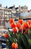 Amsterdam in tulpen Royalty-vrije Stock Afbeeldingen