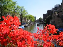 BridgBridges over the canals in Amsterdam flowers. Amsterdam is very beautiful and festive in summer. The colored houses and bridges over the canals are all in stock photography