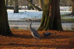 Amsterdam-Vogel-Uhr Stockbild