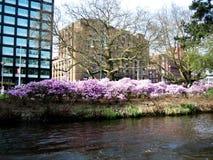 amsterdam wiosna zdjęcie stock