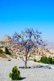 amuletttree royaltyfri foto