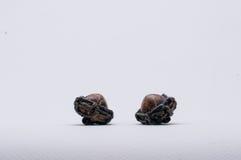 Amuletu gacenia Tajlandzki mały zło Zdjęcia Stock