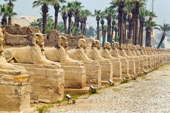 amun świątynia b7ewbj9 Egypt Luxor pn Obraz Stock