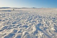 Amundsen 免版税库存图片