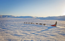 Amundsen. A lonesome musher during the Expedition Amundsen race 2012. He is crossing the Hardangervidda Mountainplateau alone royalty free stock photos