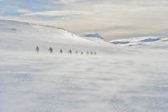 Amundsen Fotografie Stock