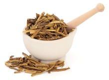 Amur Cork Tree Bark Herb Imagen de archivo libre de regalías