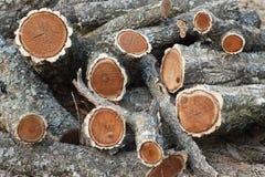 Amur cork tree firewood Stock Photography