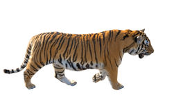 The Amur tiger Royalty Free Stock Images