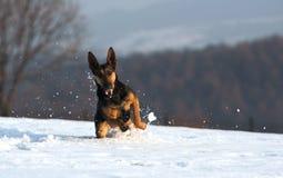 Amusement dans la neige Photographie stock