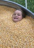 Amusement dans le maïs image libre de droits