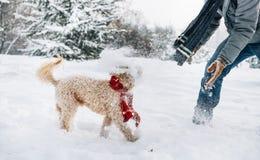 Amusement de combat de Snowball avec l'animal familier et son propriétaire dans la neige Émotion de vacances d'hiver photos stock