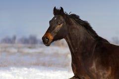 Amusement de course de cheval dans la neige image libre de droits