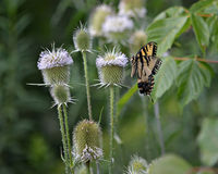 Amusement de papillon Photos libres de droits