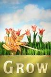 Amusement de printemps Photographie stock