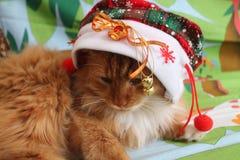 Amusement du ` s de chat en vacances Photos libres de droits
