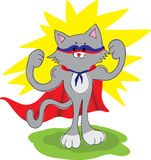 Amusing cat superhero Stock Images