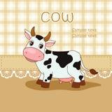 Amusing cow Stock Photography