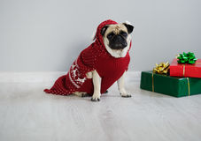 The amusing doggy of breed pug is dressed by a holiday in reindeer suit. Royalty Free Stock Image