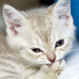 Amusing kitten Stock Photo