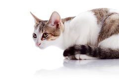 The amusing kitten sits on a white background. Royalty Free Stock Images