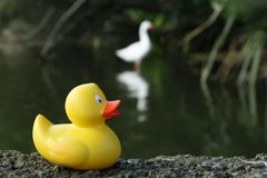 Amusing picture of a plastic duck Royalty Free Stock Images