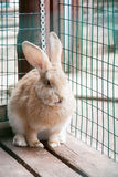 The amusing rabbit. I in summer clear day Royalty Free Stock Images