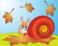 Amusing snail on ed sheet by autumn Stock Photos