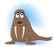 Amusing Walrus Stock Photos