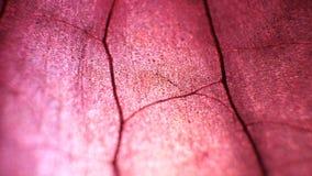Análise seca da folha video estoque