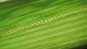 Análise verde da folha vídeos de arquivo