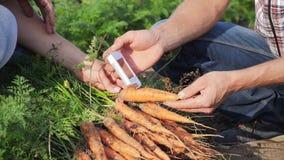 Análisis de la zanahoria en los nitratos y la radiación metrajes