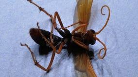 Análisis del insecto almacen de metraje de vídeo